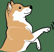 Shiba Inu, the brushwood dog from Japan sticker #5717035