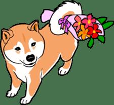 Shiba Inu, the brushwood dog from Japan sticker #5717038