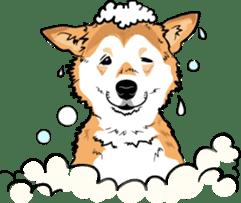 Shiba Inu, the brushwood dog from Japan sticker #5717039