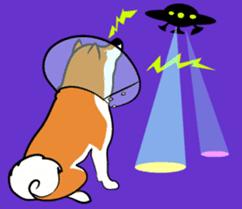 Shiba Inu, the brushwood dog from Japan sticker #5717050