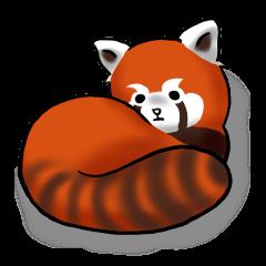 """Red Panda """"Pandy"""""""