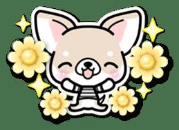 Chihuahua 3D Sticker ( English ) sticker #5759297