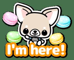 Chihuahua 3D Sticker ( English ) sticker #5759309
