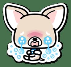 Chihuahua 3D Sticker ( English ) sticker #5759313
