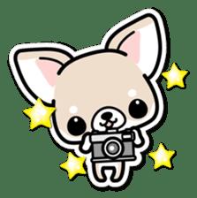 Chihuahua 3D Sticker ( English ) sticker #5759324