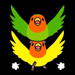 """Peach-faced Lovebird """"Kozakura-chi"""""""
