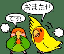 """Peach-faced Lovebird """"Kozakura-chi"""" sticker #5770095"""