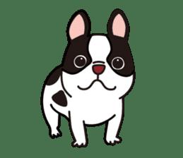French Bulldog BOO (pied) sticker #5808484