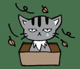 Silver tabby kitten SASUKE sticker #5836698