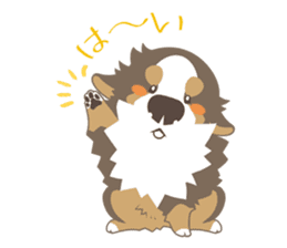 BerneseMountainDog-kurukuru no shippo- sticker #5839560