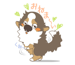 BerneseMountainDog-kurukuru no shippo- sticker #5839566