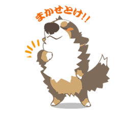 BerneseMountainDog-kurukuru no shippo- sticker #5839584