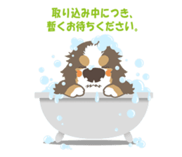 BerneseMountainDog-kurukuru no shippo- sticker #5839592