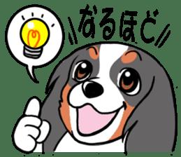 Cavalier KCS Blenheim+Tricolor+Ruby+B&T sticker #5862375