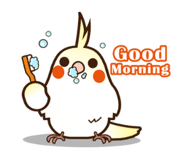 Miss Lovebird-Cockatiel 's home life sticker #6037361