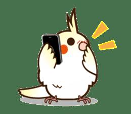 Miss Lovebird-Cockatiel 's home life sticker #6037369