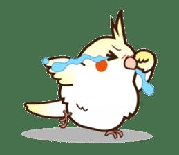 Miss Lovebird-Cockatiel 's home life sticker #6037373