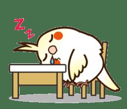 Miss Lovebird-Cockatiel 's home life sticker #6037386