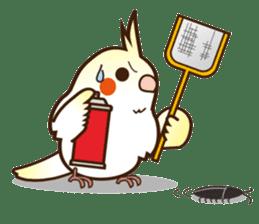 Miss Lovebird-Cockatiel 's home life sticker #6037388
