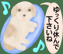 Shih Tzu. Honorific & polite language. sticker #6148854