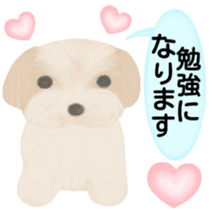 Shih Tzu. Honorific & polite language. sticker #6148859