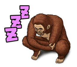 Australopithecus lie-in sticker #6203992