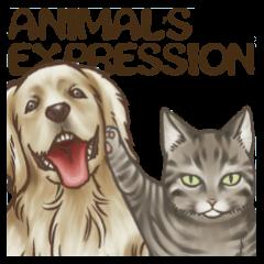 Animal's expression English ver