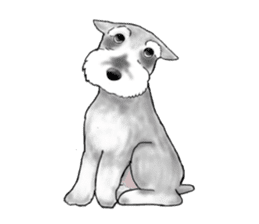 Day-to-day Schnauzer sticker #6241439