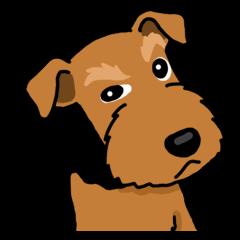 Funny dog, Welsh Terrier