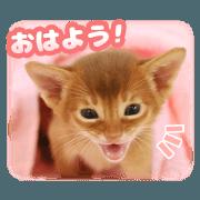 สติ๊กเกอร์ไลน์ A cat that will heal you2