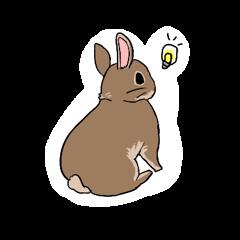 Cute rabbit life