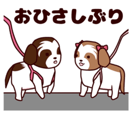 Daily Shih Tzu 2 sticker #6401807