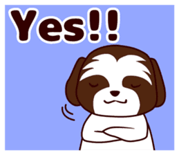 Daily Shih Tzu 2 sticker #6401830