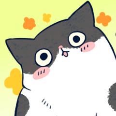 Cool Tuxedo Cat
