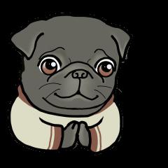 3 Snub-nosed Pups