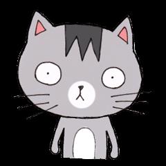 Zero - the silver cat