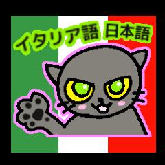 Italian and Japanese cat
