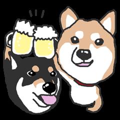 Shiba inu(Shiba ken)Nico&Chaco