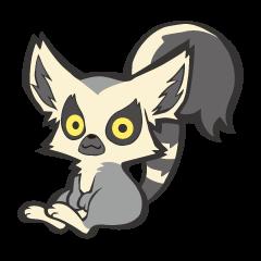 Fluffy ring-tailed lemur