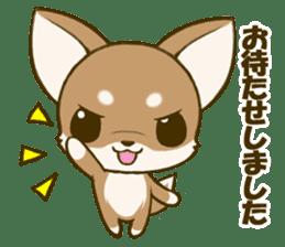 Chihuahuatan 5 sticker #6545007