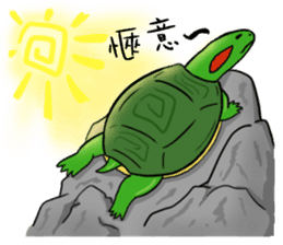 Hey~Turtle turtle! sticker #6614816