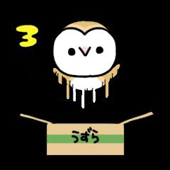Mamefuku of barn owl3