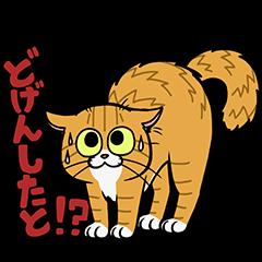 Hakata dialect cats