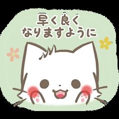 mild-fluffy-White cat -Concern-