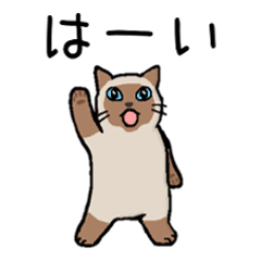 "Kitten of Siam ""Myasuke"""