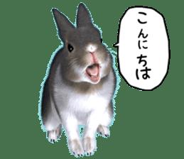 Expressive rabbit sticker sticker #6751448