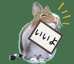 Expressive rabbit sticker sticker #6751449