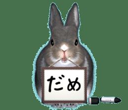 Expressive rabbit sticker sticker #6751450