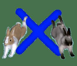 Expressive rabbit sticker sticker #6751452
