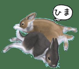 Expressive rabbit sticker sticker #6751455